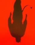 Moi, Lucifer de Glen Duncan aux Editions Denoel
