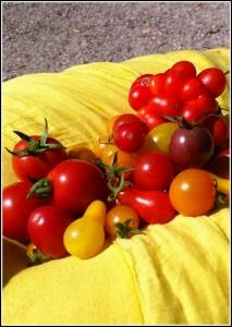 Arcanciel de tomates de Yanick Loubet