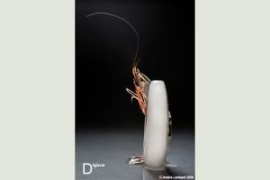 """""""Déglacer"""" par Amélie Lombard, extrait de l'expo ABC des crustacés"""